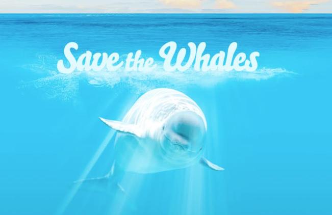 Pornhub fait la part belle aux baleines  (Si, si!)