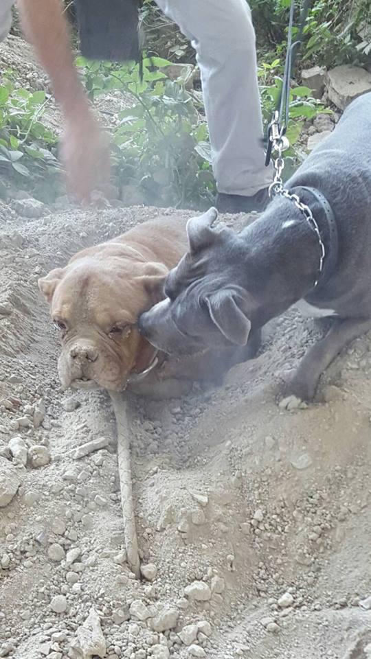 Public Buzz : Photos : une chienne enterrée vivante par son maître...
