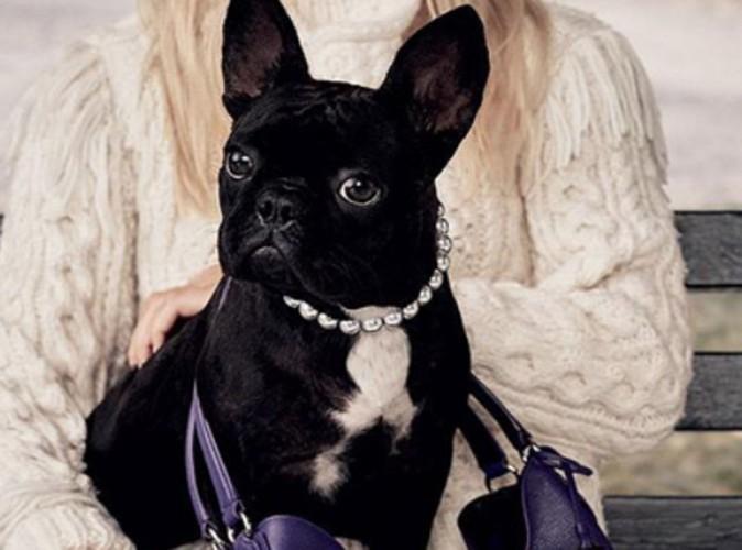 Lady Gaga : son chien déjà mannequin !