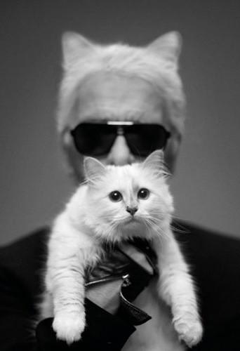 Découvrez la nouvelle collection de Karl Lagerfeld inspirée par Choupette !