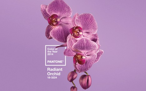 color-of-the-year-radiant-orchid-ctr