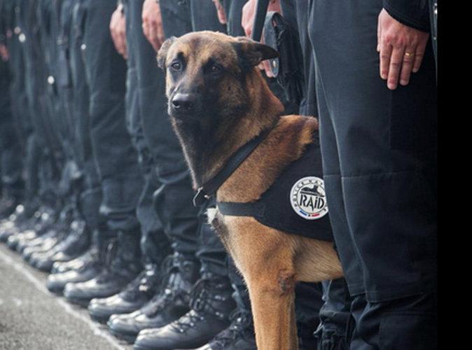 Attentats de Paris : La Légion d'honneur pour Diesel, la chienne du Raid décédée ?
