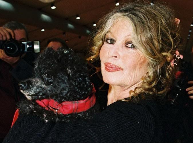 Brigitte Bardot : elle offre 600 euros à celui qui retrouvera son chat perdu !