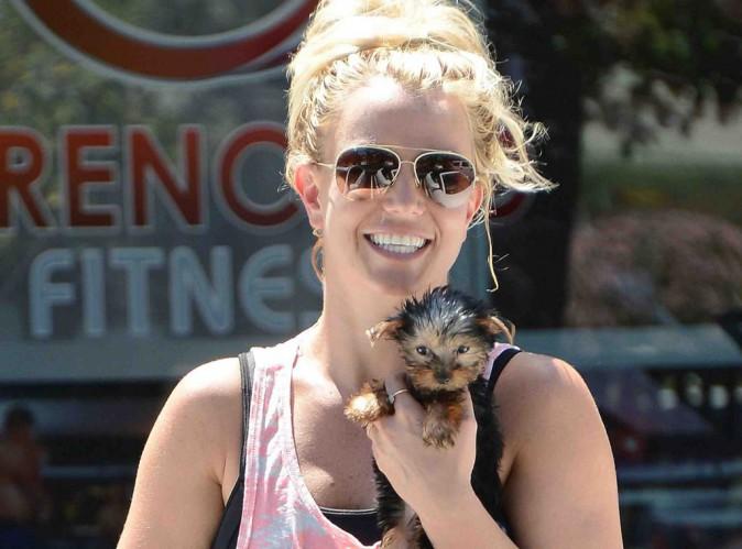 Britney Spears : elle gaspille plus de 30 000$ pour ses chiens !
