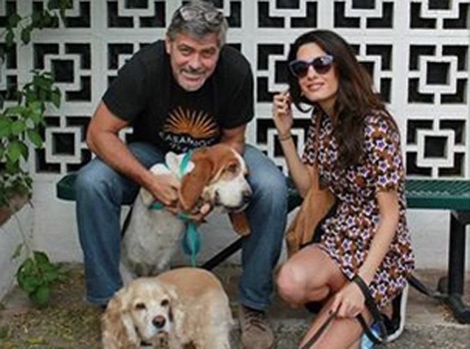 Georges et Amal Clooney : ils adoptent !