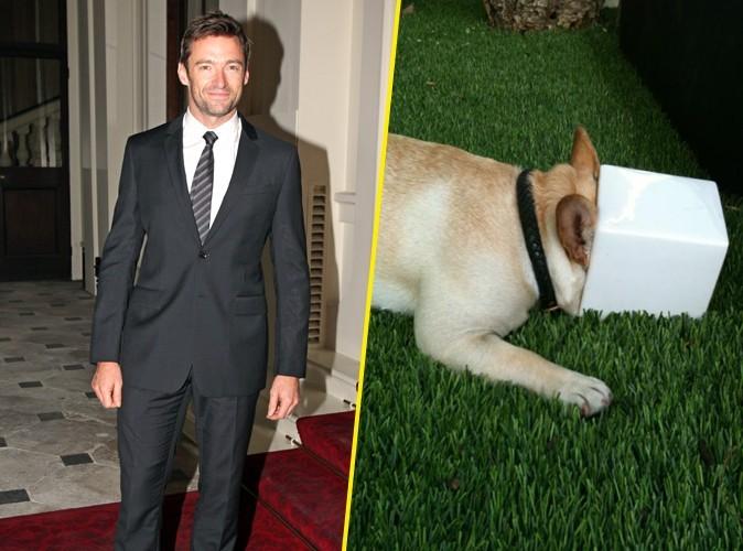 Hugh Jackman : attention, chien coincé !
