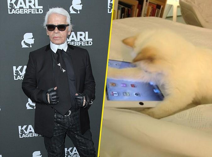 Karl Lagerfeld : son chat se confie en interview pour la première fois !