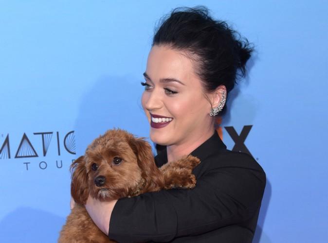 Katy Perry : une nouvelle d�claration d'amour pour Butters !