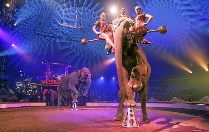 Le cirque Arlette Gruss est en tournée en France et plante son chapiteau à Avignon jusqu'au 9 septembre!