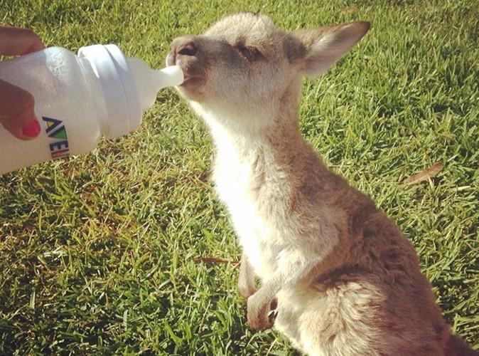 """Les Anges 6 : Sydney le kangourou était """"tout près de mourir"""", il gardera des """"sequelles irréversibles au cerveau"""" !"""