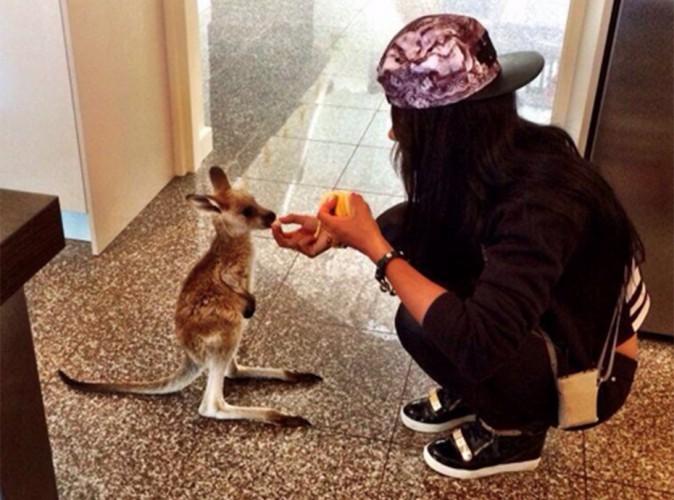 """Les Anges 6 : Sydney : rebaptisé Cloudy, le célèbre kangourou a """"retrouvé la santé"""" !"""