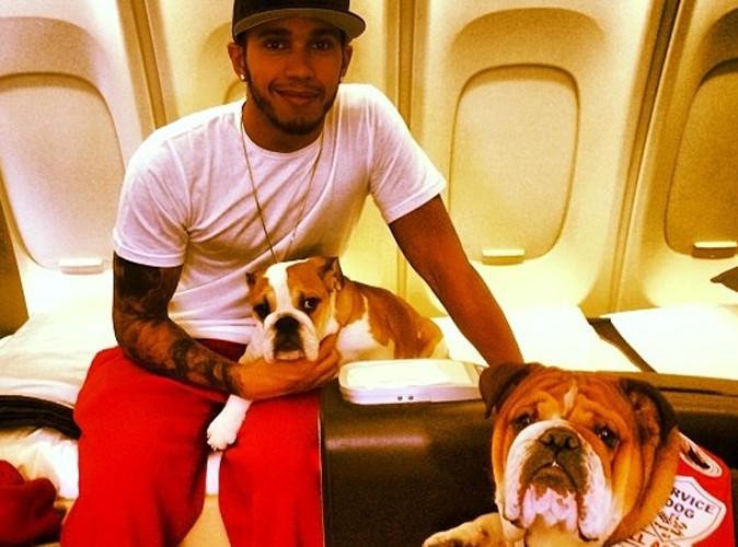 Lewis Hamilton : ses deux chiens voyagent en première classe !