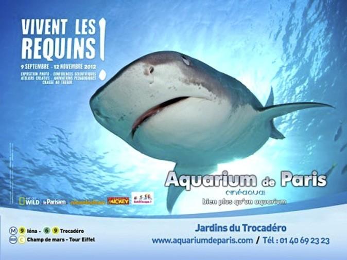 Venez découvrir les requins à l'Aquarium de Paris !