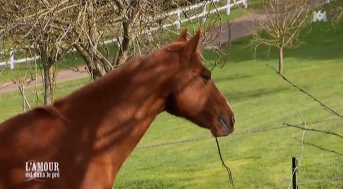 Les chevaux ....