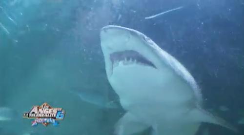 Anaïs, Linda, Eddy, Shanna, Amélie vont plonger avec les requins