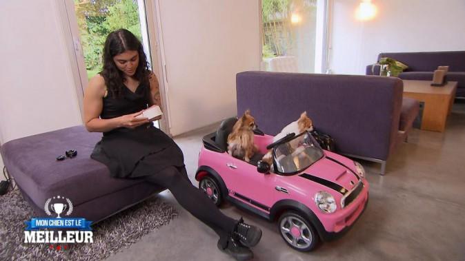 """Chez la """"maman"""" de Fiona, les chiens de Brigitte ont gardé leurs goûts de luxe. Leur petite voiture est à l'image de leur vie de chien : bl..."""