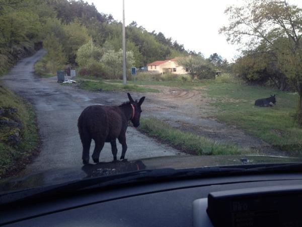 L'âne farceur