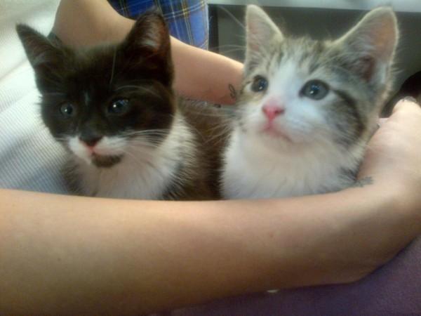 Katy et ses deux petits chatons