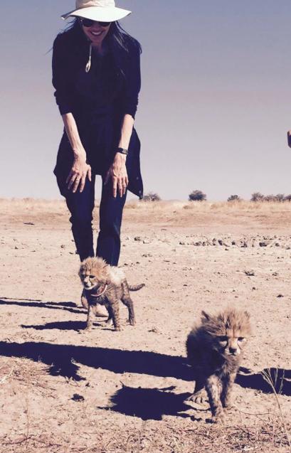 Angelina Jolie adopte trois nouveaux bébés... Guépards !