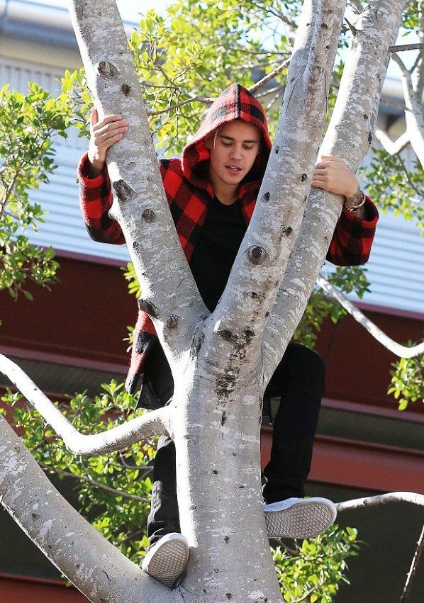 Justin Bieber se prend pour un singe dans les arbres !