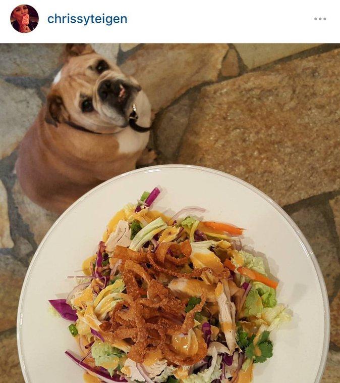 le bouledogue de Chrissy semble avoir envie de déguster le plat de sa maitresse