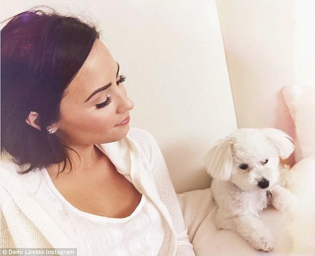 Demi Lovato a perdu son chien Buddy