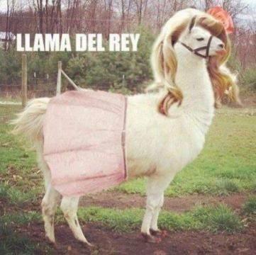 Lana Del Rey ? Non, Lama Del Rey !