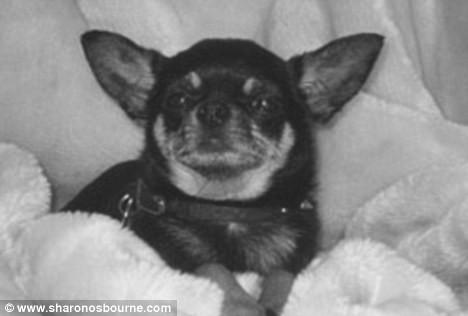 Martin, le chihuahua disparu de la famille Osbourne.