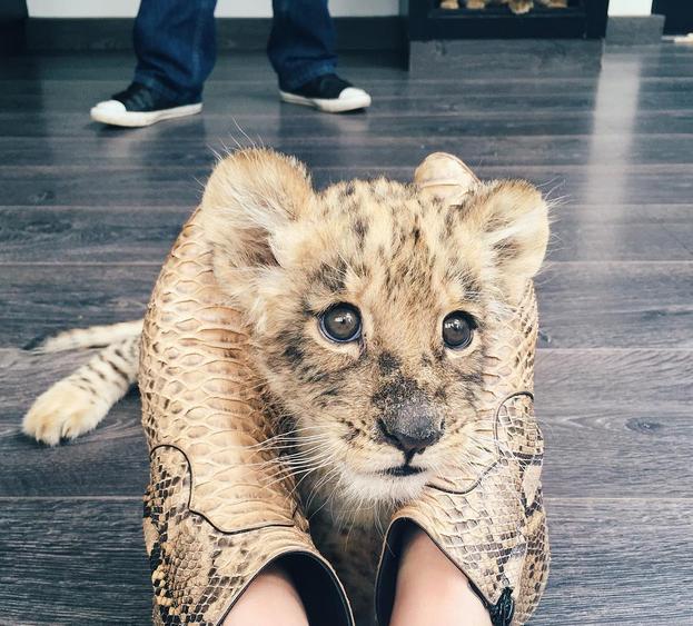 """Photos : Khloe Kardashian et Kendall Jenner : leur """"incroyable"""" journée avec une espèce menacée !"""