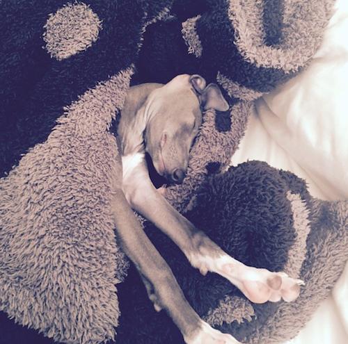 Photos : Kylie Jenner : Norman, son nouvel amour, occupe toutes ses pensées !