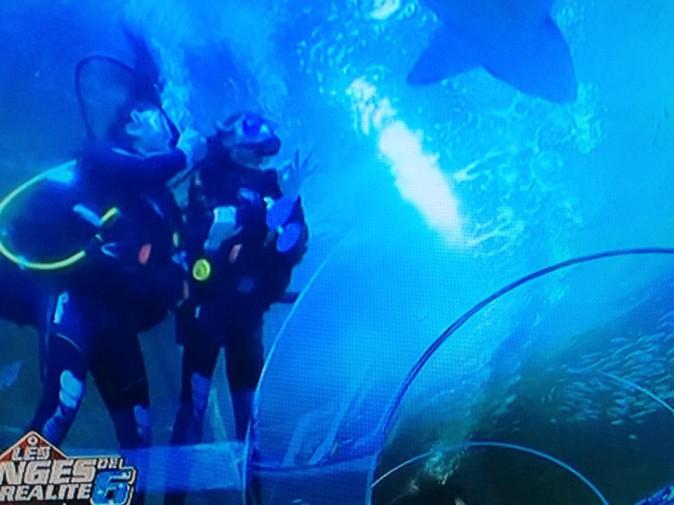 Eddy et Shanna nagent avec les requins