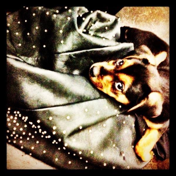Happy dans le sac de Miley