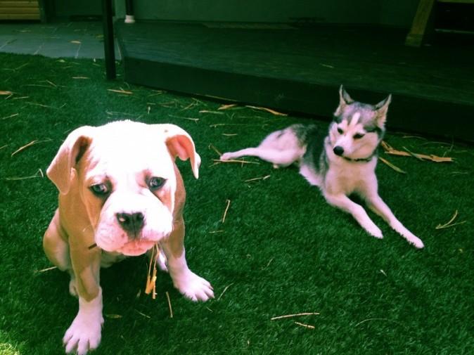 Ziggy et Floyd