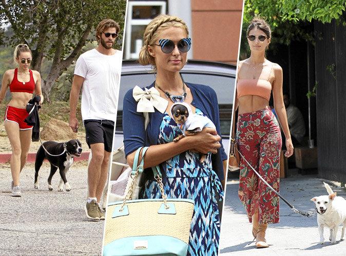 Miley Cyrus, Paris Hilton, Emily Ratajkowski... Chiennes de Vip !