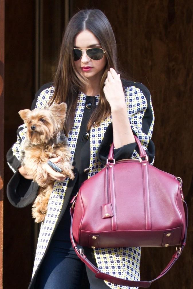 Le chien plus petit que le sac !