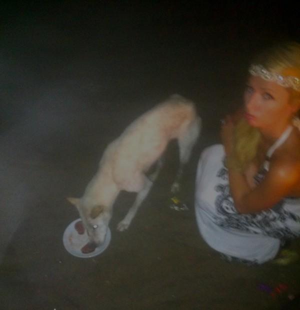 Paris Hilton qui offre un repas grand luxe à un chein !