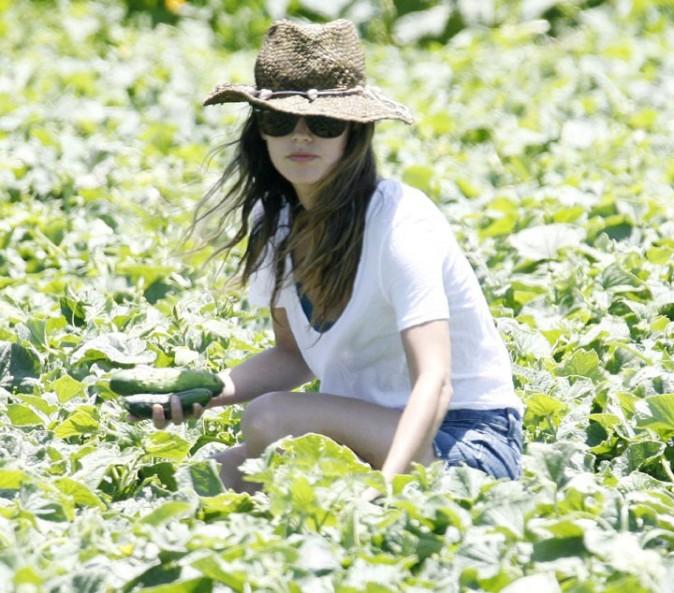 Rachel Bilson faisant de la cueillette de légumes dans la ferme de la famille Underwood à Moorpark en Californie, le 26 juin 2011.