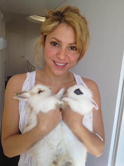 Shakira et ses lapins !
