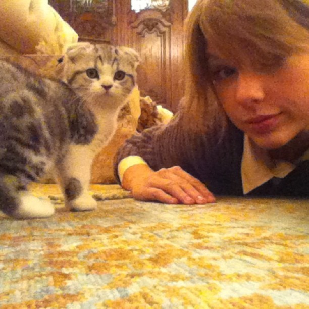Cette petite boule de poils va suivre Taylor partout !