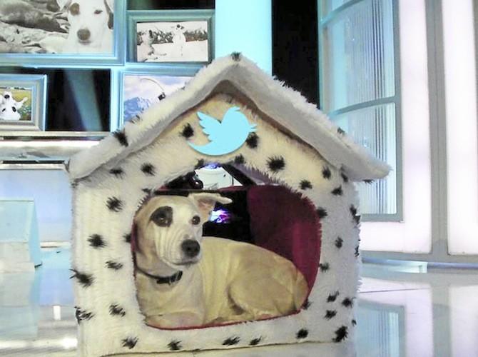 Le chien de Dechavanne, Adeck sur Twitter et Facebook !
