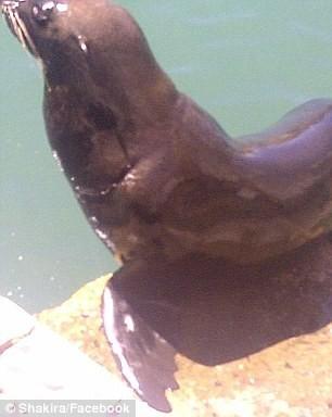 Le lion de mer qui a attaqué Shakira !