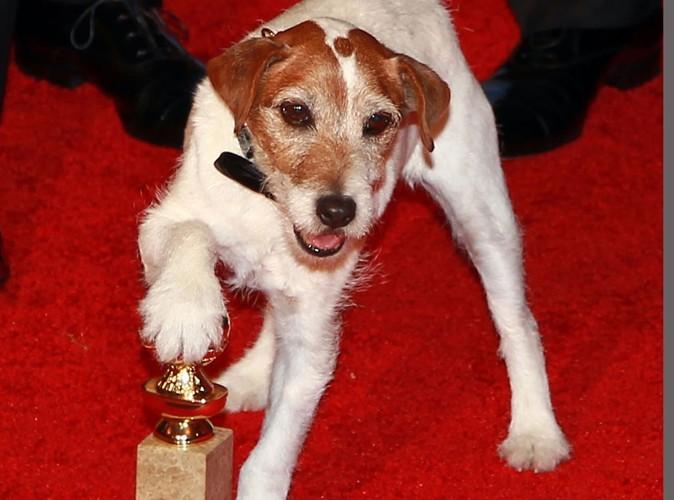 The Artist : le chien Uggie doit mettre fin à sa carrière prématurément !