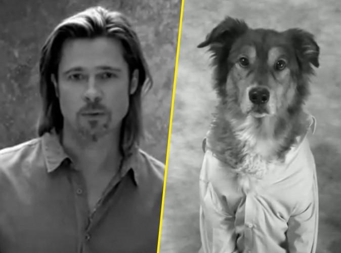 Vidéo Buzz : même les chiens se moquent de Brad Pitt !