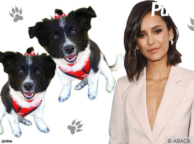 Nina Dobrev : Sans défense face à deux petits chiens !